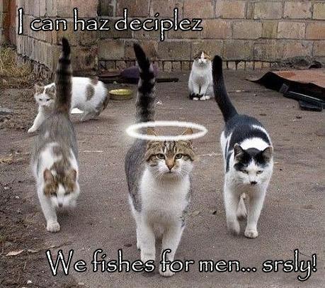Deciplez.jpg