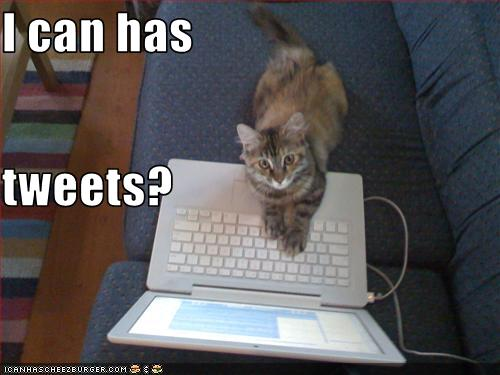 VB is lolcat famous on twitter