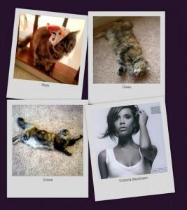 check out victoria beckham cat at twitter.com/kittentweet