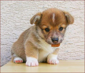 Cute Overload Puppy!