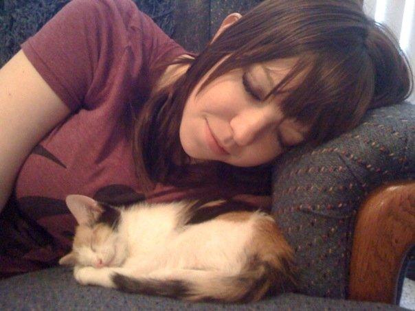 kitten-nap