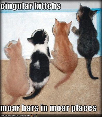funny-pictures-cingular-kittens