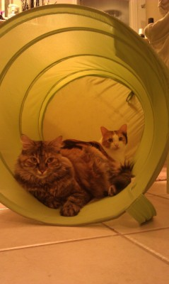 Cats hanging out in the laundry hamper